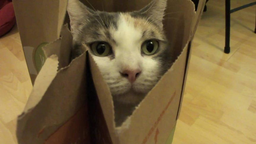 4 Ways to Turn Old Paper Bags Into Cat Toys
